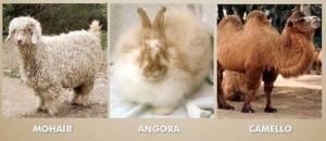 Fiber Animals 2